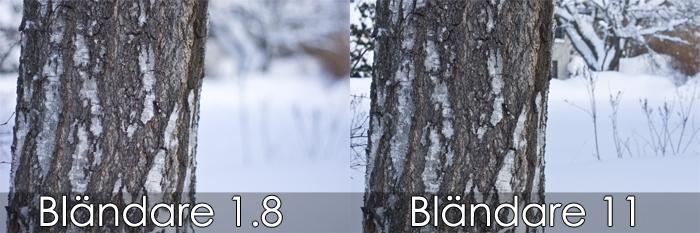 Träd fotograferad med olika bländaretal